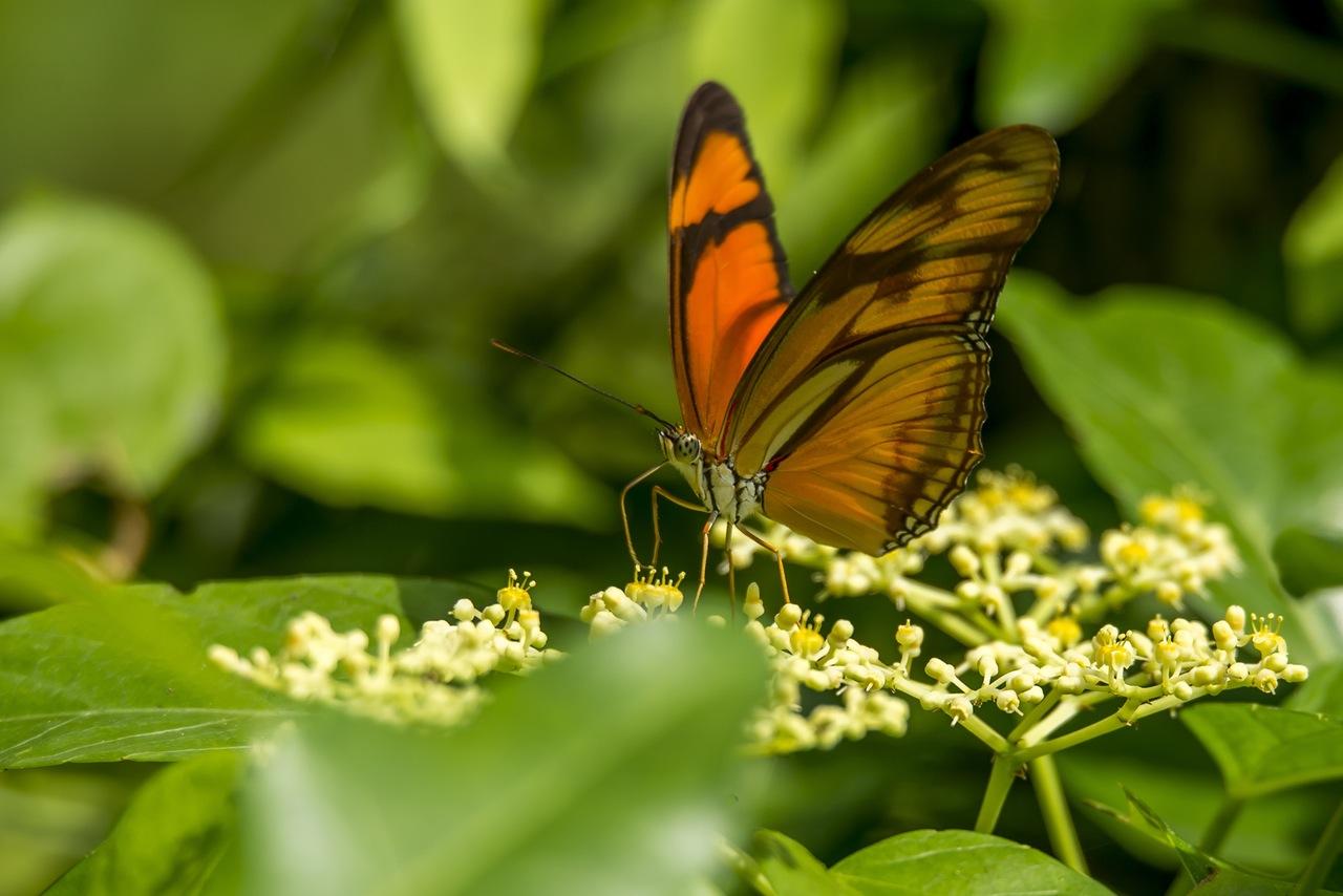 Utilizar plantas que atraen a las mariposas al paisaje